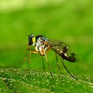 Small Fly by KiriLees