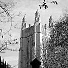 Yale by kailani carlson