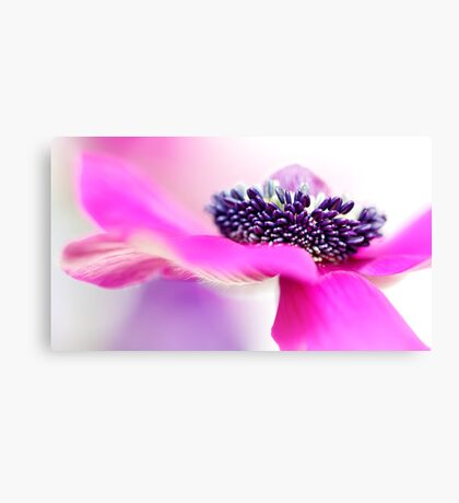 Pretty in Pink.... Canvas Print