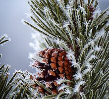 Hoar frost by Linda Sparks