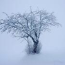 The snowy Tree by Imi Koetz