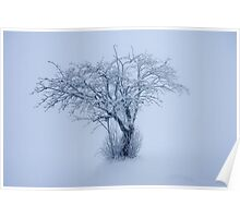 The snowy Tree Poster