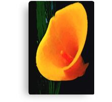 summer's yellow lily Canvas Print