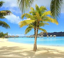 Bora Bora Beach and Palms by Honor Kyne