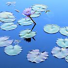 Water Lily - Tahitian Islands by Honor Kyne