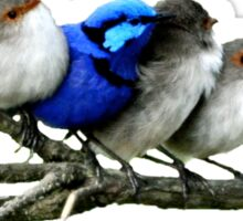 Blue Wren Family Clothing Sticker