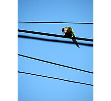Highwire Photographic Print