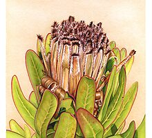 Protea in Autumn by Suzannah Alexander