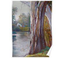 Goulburn River Gums Poster