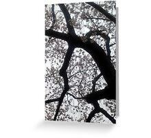 Washington D.C. - Cherry Blossoms Greeting Card