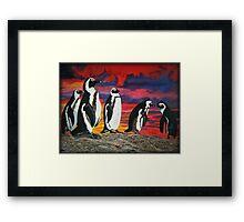 African Penguins Framed Print