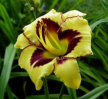 Day Lily in Full Bloom by mussermd