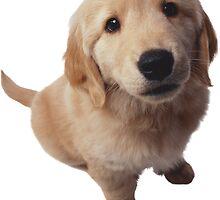 Puppy! by Vitalia