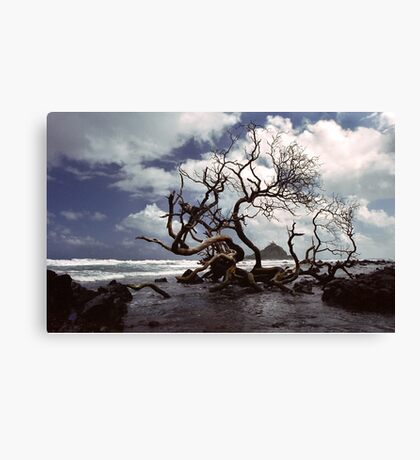 Hana Coast Canvas Print