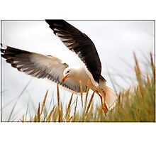 Fly away, Stanley Photographic Print