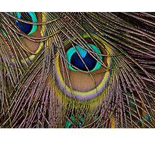 Peacock Plumage Photographic Print