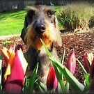 Traipsing through the Tulips by Bine