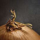 Onion One by Keith Johnston