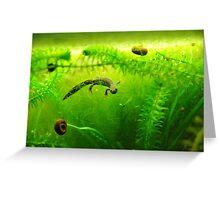 Under water salamander  Greeting Card