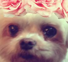 sassy puppy Sticker