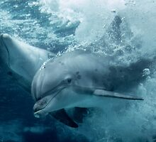 Diving Dolphins by mister-matt