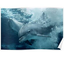 Diving Dolphins Poster