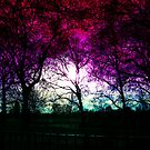 london high park at the end of january by sebmcnulty