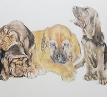 Bloodhound Puppies by BarbBarcikKeith