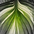 Hosta Leaf In Partial Color  by WildestArt