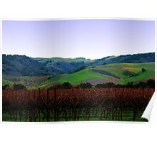 Vineyards and Rolling Hills Poster