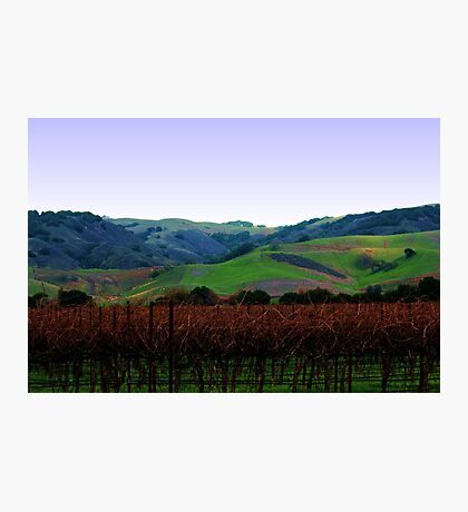 Vineyards and Rolling Hills Photographic Print