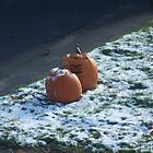 Pumpkins by robertribbit