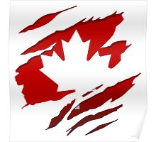 Canada Red Leaf Poster