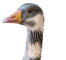 Goose closeup by mjamil81