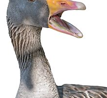 Duck face closeup by mjamil81