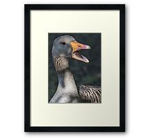 Grey duck closeup Framed Print