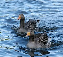 Two ducks by mjamil81