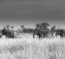 Elephant March by Michael Farley