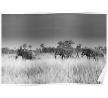 Elephant March Poster