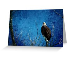 Bald Eagle Blues Into The Night Greeting Card