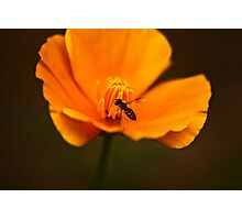 Flower and The Bee Photographic Print