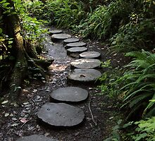 Cape Flattery Trail by Carol Bailey White