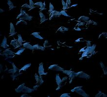Evening Corellas by Simon Veitch