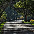 Levee Road by Barbara  Brown