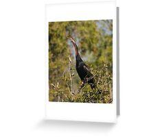 Darter - Wetlands of Fogg Dam Northern Territory Australia Greeting Card