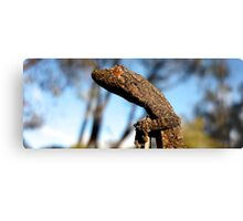 Southern Spiny tailed gecko Metal Print