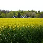 Rape Field by Heidi Mooney-Hill