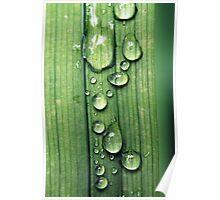 Macro Water Drop Plant Poster