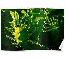 LIGHT IN THE GREEN!!! Flowers Poster