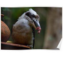 The Kookaburra Thief Poster